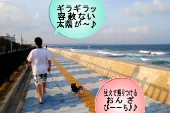 沖縄あさんぽ