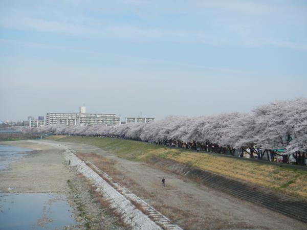 桜 030