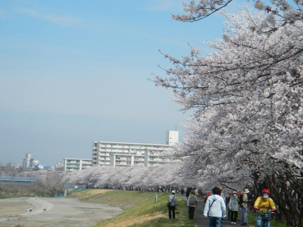 桜 009