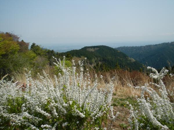 高尾山 082