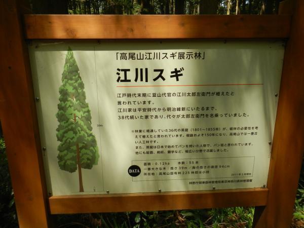 高尾山 092