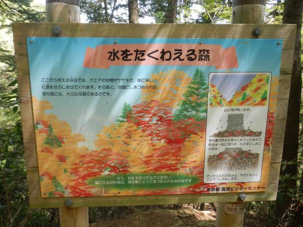 高尾山 099