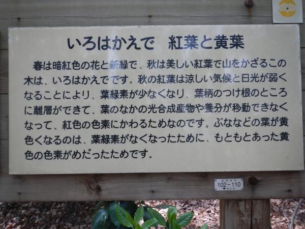 高尾山 111