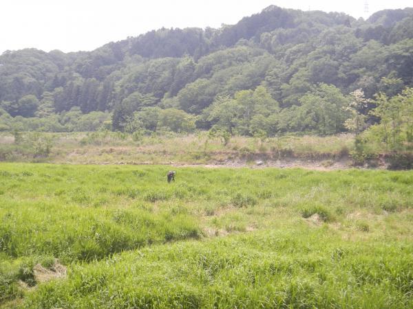 秋川 024