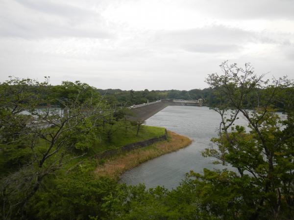 多摩湖狭山湖 013