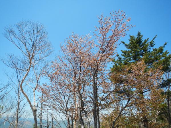 雲取山 067