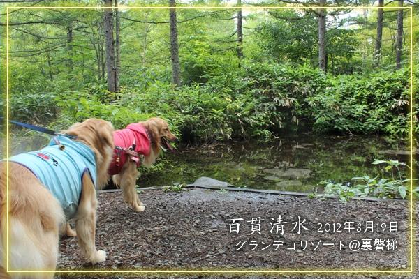 dogpict.jpg