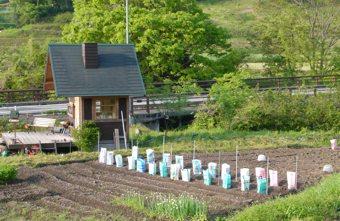 2012連休苗もの植え
