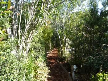 ジブリトトロの森への小道