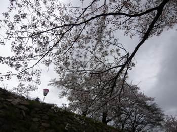 お城桜雨の前