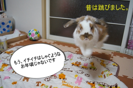 DSC03221_20121018215641.jpg