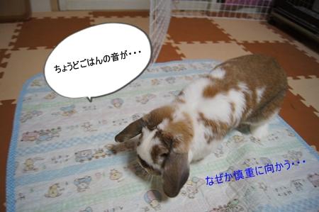 DSC05743_20120911183848.jpg