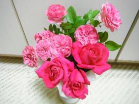 DSCF2646_convert_20121005181856.jpg