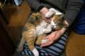 愛猫:2014.01.20