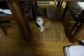 愛猫:2014.01.25