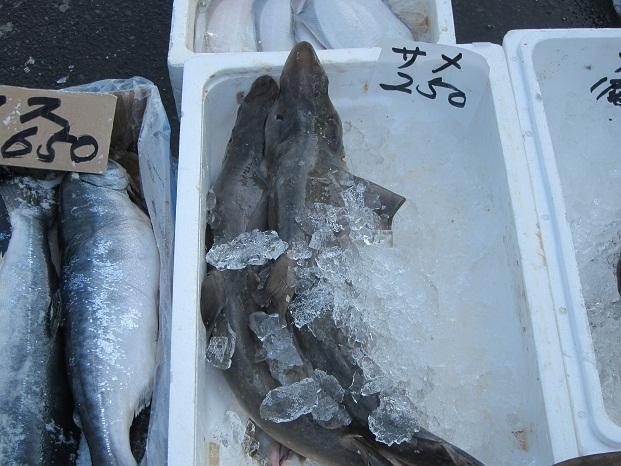八戸朝市の鮫