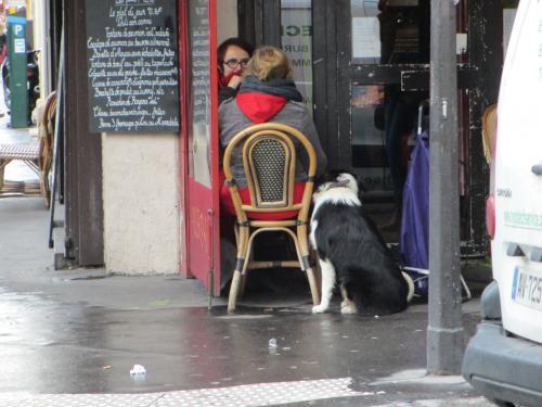 cafedog.jpg