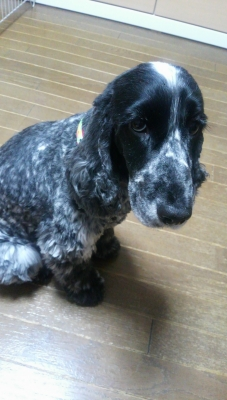 oさまご愛犬140209 (1)