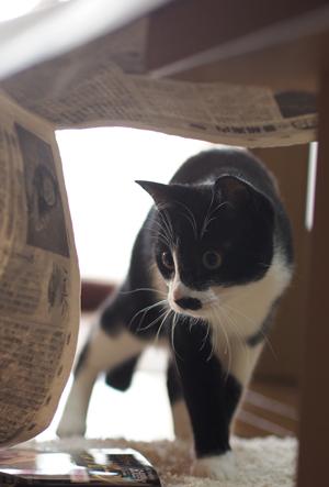 新聞トンネル