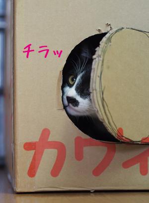 箱からチラっ