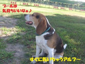 001_convert_20120807235846.jpg