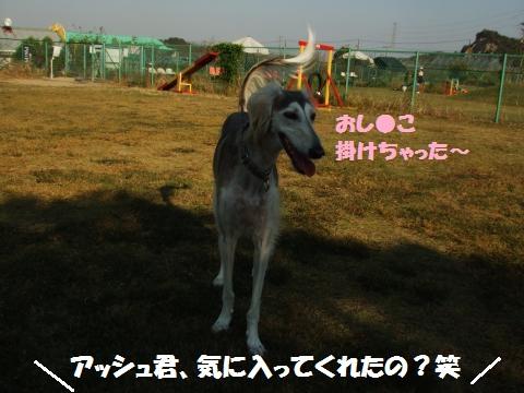 003_convert_20121025232316.jpg