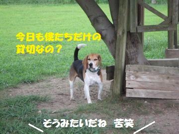 004_convert_20120910215855.jpg