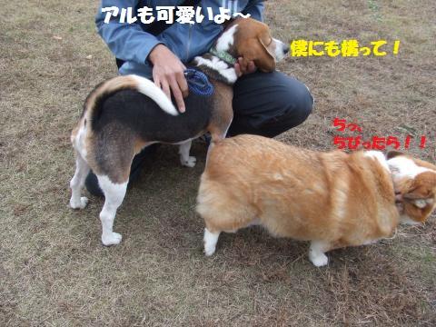 005_convert_20121206232941.jpg