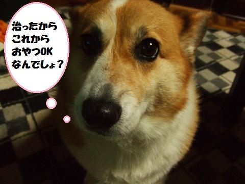 006_convert_20121018233400.jpg