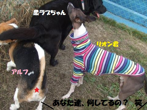 006_convert_20121109020226.jpg