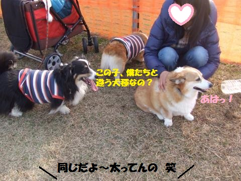 006_convert_20140203012357.jpg