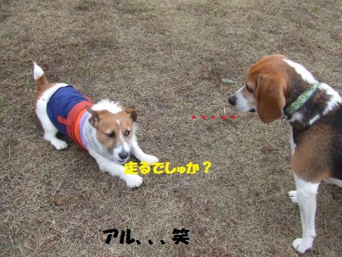 008_convert_20121206233131.jpg