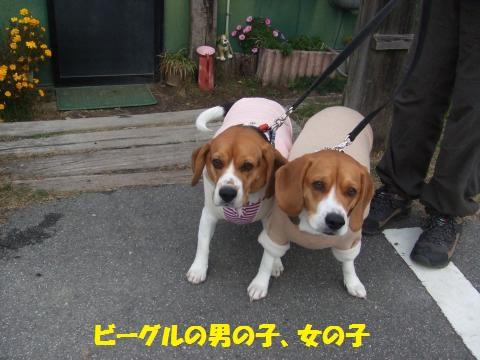 010_convert_20121206233249.jpg