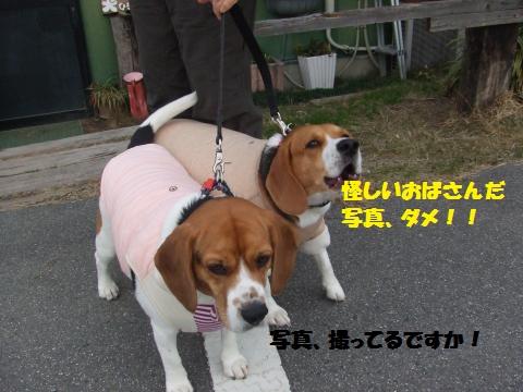 011_convert_20121206233333.jpg