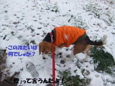 014_convert_20140209040026.jpg
