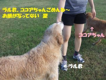 015_convert_20120808000039.jpg