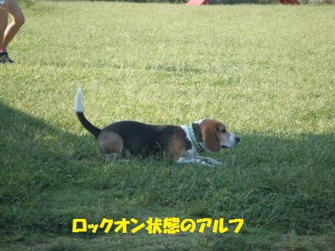 015_convert_20121012005154.jpg