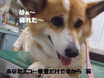 016_convert_20120902235409.jpg