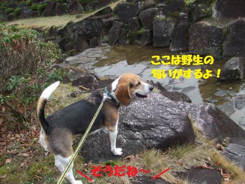 018_convert_20121126035147.jpg