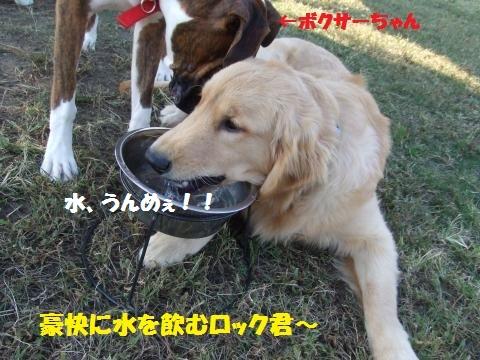 019_convert_20121025233340.jpg