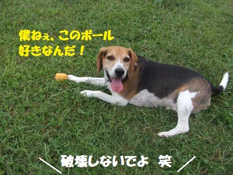 021_convert_20121008025911.jpg