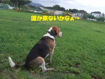023_convert_20120910215504.jpg