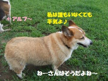 024_convert_20120910215945.jpg