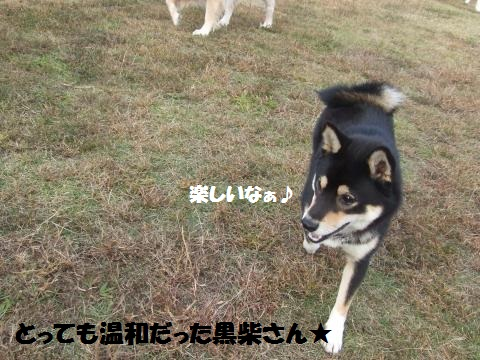 025_convert_20121109020321.jpg