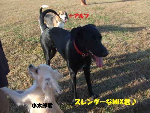 030_convert_20121113001854.jpg