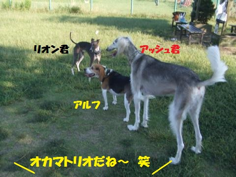 031_convert_20121011235039.jpg