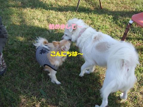 032_convert_20121025233658.jpg