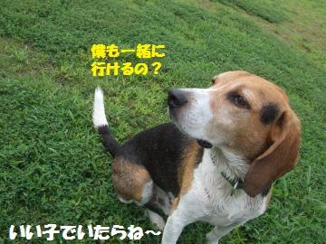 034_convert_20120812033955.jpg