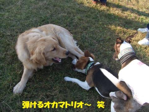 036_convert_20121025233510.jpg