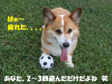 037_convert_20121008030224.jpg